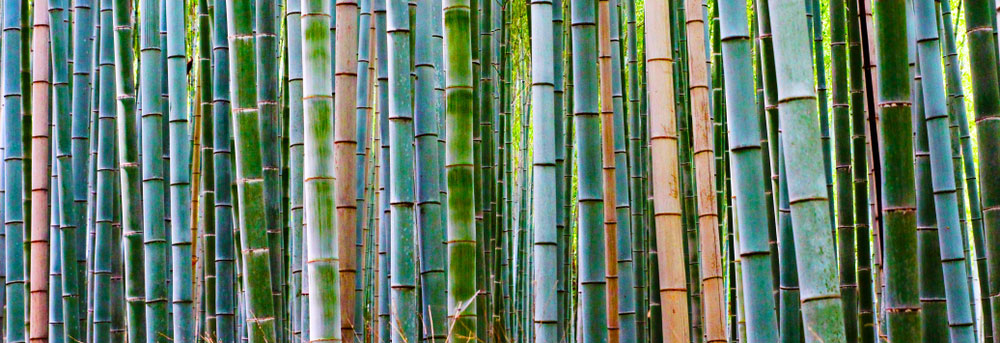 5 Reasons why your staff will love wearing bamboo